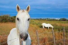 Horses pet equestrian sport Stock Photos