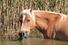Horses pet equestrian sport Royalty Free Stock Photo