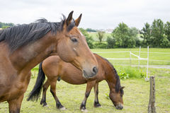 Horses. A photo of some horses Royalty Free Stock Images