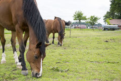 Horses. A photo of some horses Stock Images
