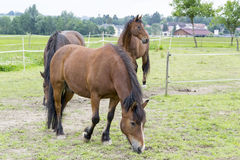 Horses. A photo of some horses Stock Photo