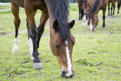 Horses. A photo of some horses Royalty Free Stock Photography