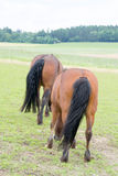 Horses. A photo of some horses Stock Image