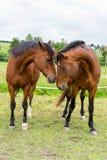 Horses. A photo of some horses Royalty Free Stock Photo