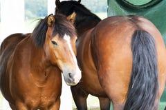 Horses. A photo of some horses Stock Photos