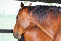 Horses. A photo of some horses Royalty Free Stock Image