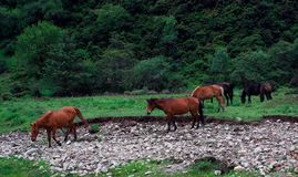 Horses in plateau ranch Stock Photo