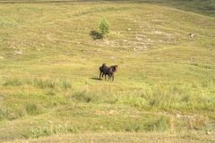 Horses playing in the field Stock Photography