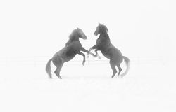 Horses playing on a foggy day in winter Stock Images