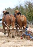Horses Ploughing Royalty Free Stock Photos