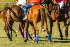 Horses Polo Players Bunched Field Abstract. Polo Riders Players  Horses and referee unidentified abstract bunched together equestrian animals playing a local royalty free stock photos