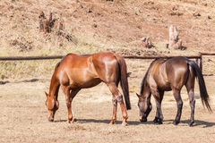 Horses ponies paddock Closeup Stock Photography
