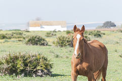 Horses and Ponies Spanish race Royalty Free Stock Photos