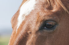 Horses and Ponies Spanish race Royalty Free Stock Images