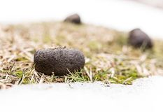 Horses poop in the snow. In the park in nature Royalty Free Stock Images
