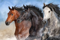 Horses portrait in dust Royalty Free Stock Image