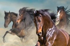 Horses portrait in motion royalty free stock images