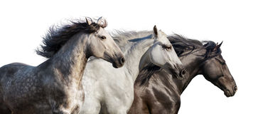 Horses portrait in motion Stock Photo