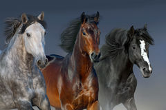 Horses portrait in motion Stock Images