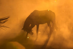 Horses posing in dust Royalty Free Stock Photos