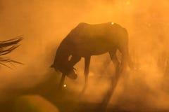 Horses posing in dust Royalty Free Stock Photos