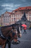 Horses at Prague city royalty free stock images