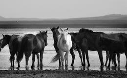 The horses Stock Photo