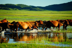 Horses in prairie Stock Photo