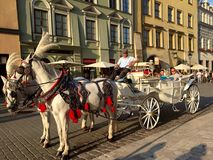 Horses pulling carriage in Kraków, Poland royalty free stock photos