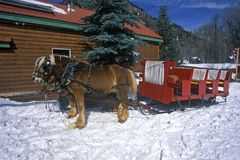 Horses pulling sleigh in snow during holidays, Lazy Z Ranch, Aspen, Maroon Bells, CO Royalty Free Stock Image