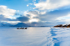 Horses pulling sleigh in winter Stock Photos