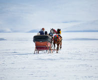 Horses pulling sleigh in winter Royalty Free Stock Image