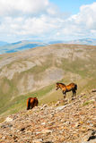 Horses in the Pyrenees mountains, Spain Royalty Free Stock Image