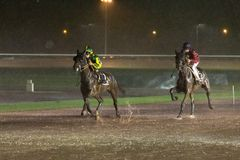 Horses race on a rainy hippodrome