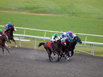 Horses race round track with 3 in front running Royalty Free Stock Photography