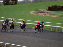 Horses race round track as the field of horses Stock Photos