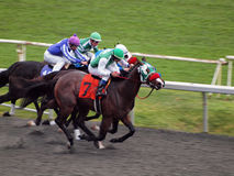 Horses race towards the finish-line running Royalty Free Stock Photography