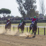 Horses race Royalty Free Stock Images