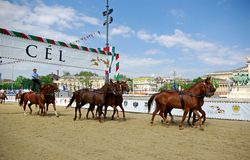 Horses on racetrack royalty free stock photos