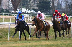 Horses racing. In France royalty free stock images