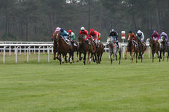 Horses racing. In Europe France Royalty Free Stock Photo