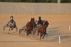 Horses Racing in a Harness Race Royalty Free Stock Photos