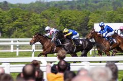 Horses racing Royalty Free Stock Photography