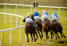 Horses racing the track. Four horses racing the track Royalty Free Stock Photo
