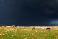 Horses in the rain. Horses eating in the rain stock images
