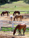 Horses in Ranch Stock Photography