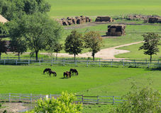 Horses on a ranch. And green field Stock Photo