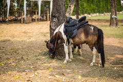 horses on ranch feeding Stock Photos