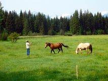 Horses at a ranch in idaho Royalty Free Stock Photography