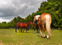 Horses on Ranch Stock Photography